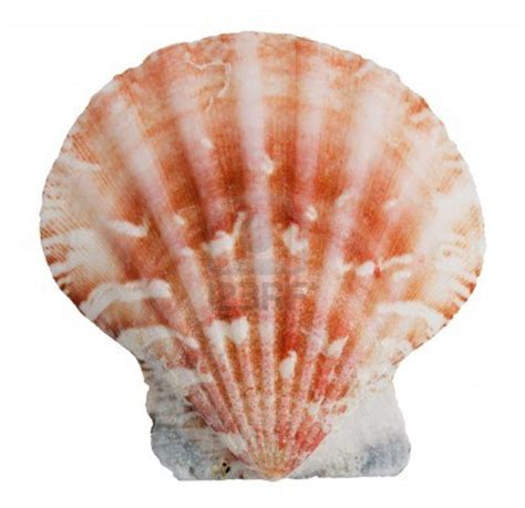 color shell genetics what determines the colors and patterns of a