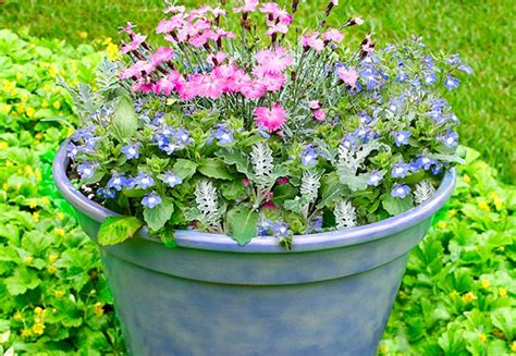 how to plant a container garden flowers 12 container garden combos