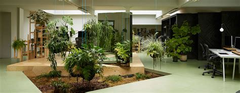piante da ufficio progettazione e manutenzione giardini a