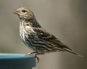 miketes common backyard birds in new jersey in the