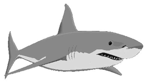 Great White Shark Clip by Spreekbeurt De Haai