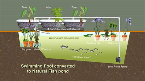 Design Your Own Home Louisiana converting a swimming pool to grow fish the permaculture