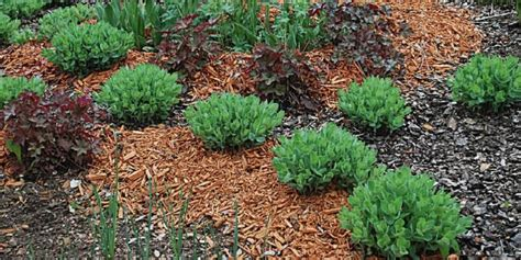 pacciamatura giardino fiori giardino balcone e terrazzo green