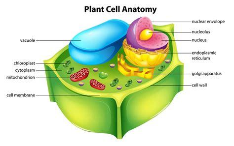 vacuole structure