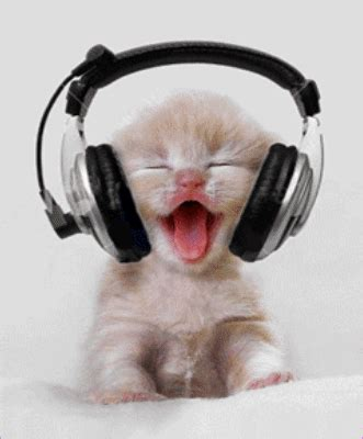 cat songs songs to sing to your cat and other feline favourites books top 9 stress relieving activities at work that ll keep you
