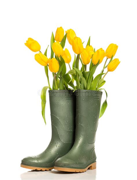 Sp Boot Flower White tulips stock images image 38690964