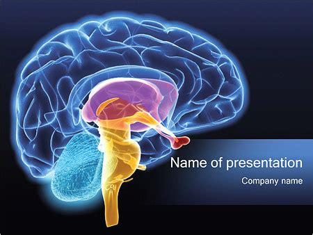 powerpoint templates free download neurons cerebro humano plantillas de presentaciones powerpoint y