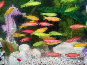 Types Of Aquarium by Types Of Aquarium Fish For Good Luck Photos Pics 240953