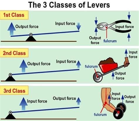 bvg8science output and input forces 1st class lever