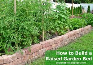 How to build a raised garden bed for vegetables