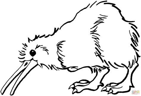 coloring page kiwi bird kiwi is looking for food coloring page free printable