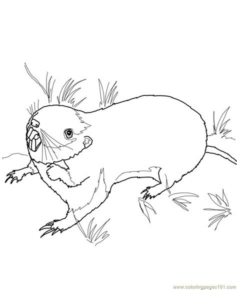 coloring pages of prairie dogs littel praire boy free coloring pages