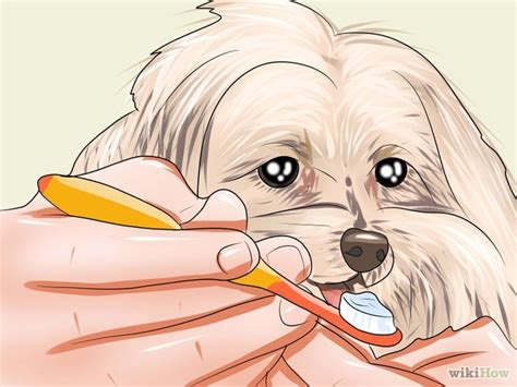 how to clean yorkie eye boogers 9 ways to groom a terrier wikihow