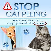stop cat from peeing on bed cat behavior on pinterest cat care tips cat health and