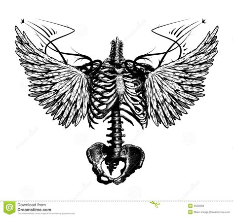 skeleton angel stock illustration image of bare skelet
