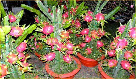ide bisnis modal kecil dibidang pertanian