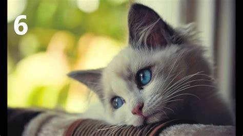 imagenes mas bonitas top de los 10 im 225 genes de gatos mas hermosas youtube