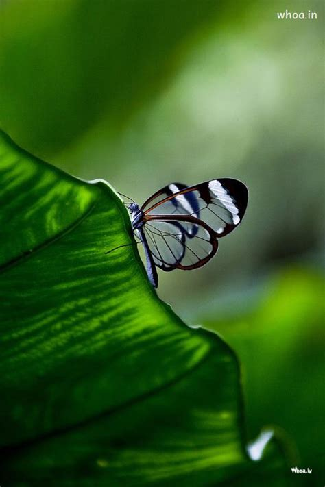 natural korean wallpaper with leaves loves butterfly butterfly sitting on a leaf hd wallpaper