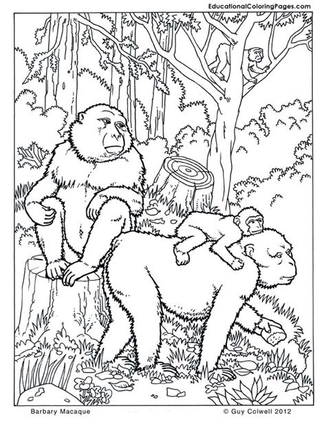 jungle monkey coloring page free coloring pages of nature