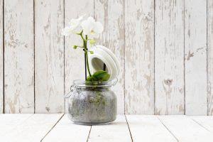 come curare le orchidee in vaso come curare le orchidee in casa i nostri consigli per