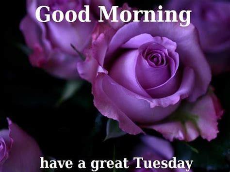 tuesday images morning tuesday images quotes messages