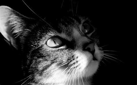 imagenes en blanco y negro wallpaper 43337d1369006561 wallpapers en blanco y negro wallpapers