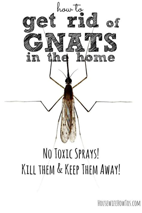 how to get rid of gnats in your bathroom get rid of gnats in your home and keep them away for good