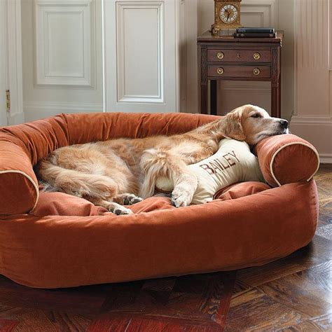 dog on sofa personalized bone dog pillow siren sadie pinterest