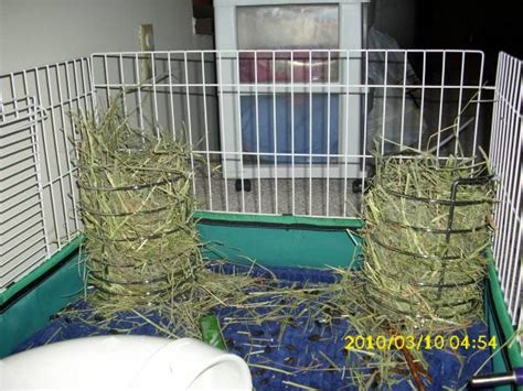 Hay Rack For Guinea Pig Cage by New Hay Rack Guinea Pig Cage Photos