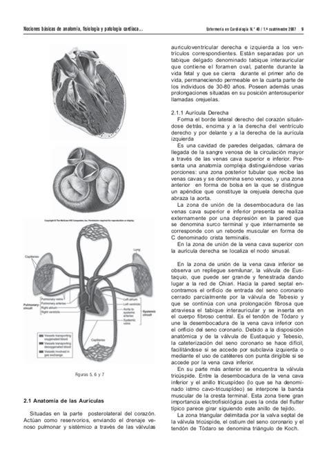 anatomofisiologa y patologa bsicas nociones b 225 sicas de anatom 237 a fisiolog 237 a y patolog 237 a cardiaca bradia