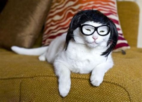 Jo In Pet Transfiguration Cap M 10 cats who think they are smarter in glasses