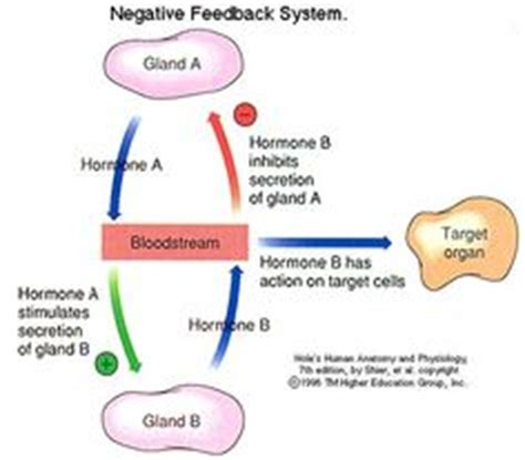 1000+ images about endocrine system on pinterest