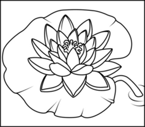 coloring pictures of lily flowers water lily coloring page printables apps for kids