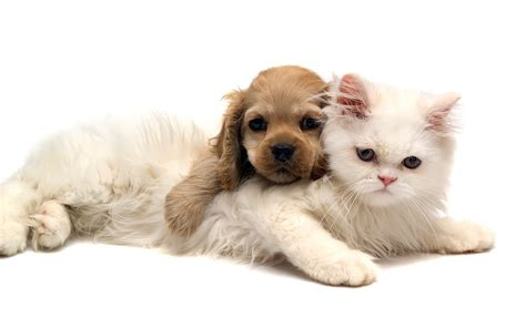 puppy and cat cat and desktop wallpapers 1600x1200