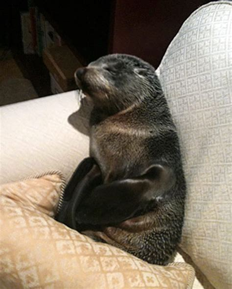 seal on couch here is a post where you can discuss anything other than