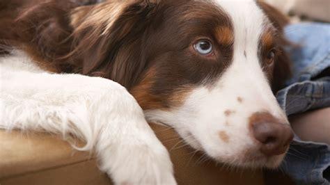 hunderassen alle hunderassen von   mit bild und namen