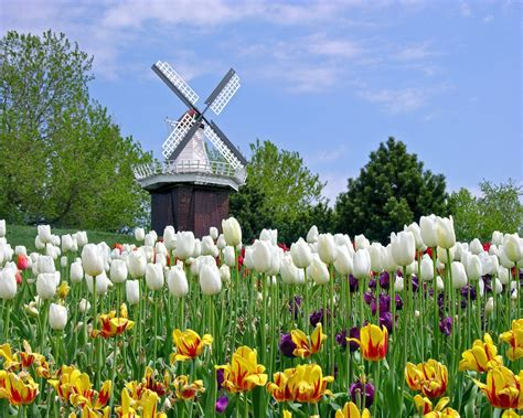 Amazing Things To Do In Garden City Kansas #3: Holland_tulip_festival_michigan-1280x1024.jpg