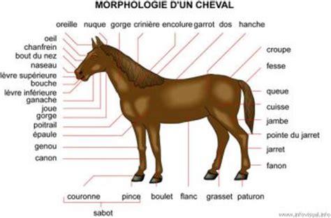 chevalblog @cheval