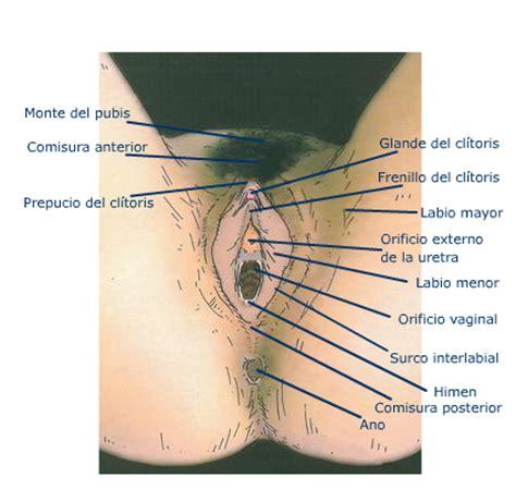 vestibulo feminino glandula vestibularis major meddic