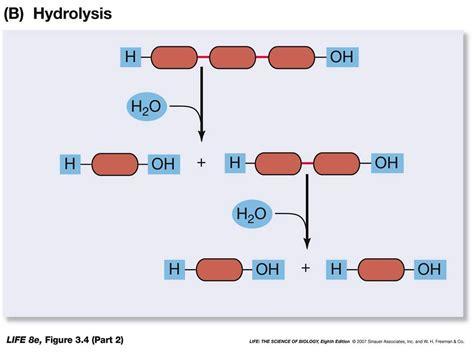 metathesis reaction exle seotoolnet com