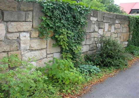 sichtschutz vorgarten ideen mauer zaun oder pflanzen
