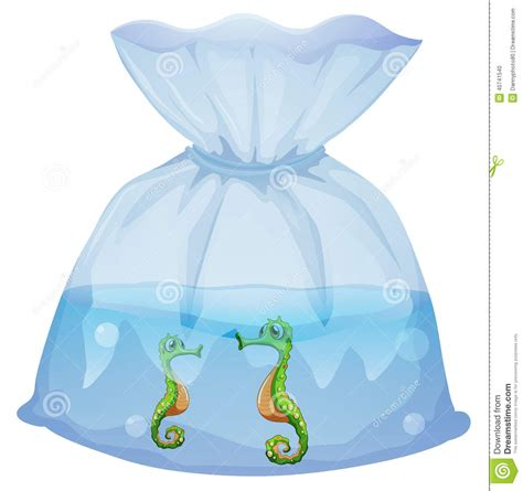 Illustration Pouch a pouch with seahorses stock vector image 40741540
