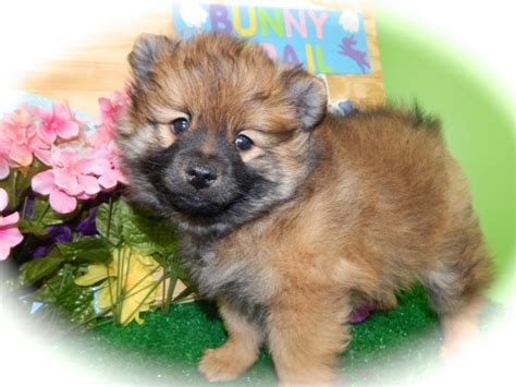 hug puppies for sale hug a pup the puppy specialists