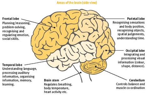 the brain controls our every thought and action this