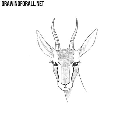 How To Draw A how to draw a gazelle drawingforall net