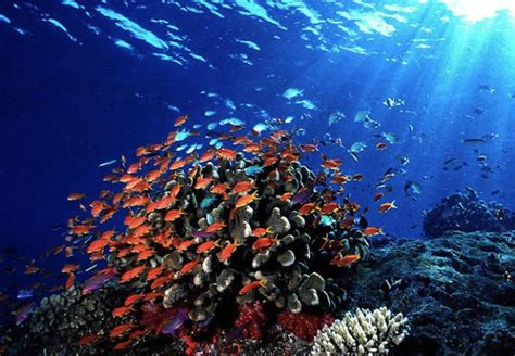 dive fiji fiji scuba diving guide to the best scuba diving in
