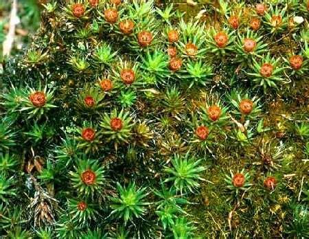 53 best botany images on pinterest