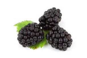 blackberries free stock photo public domain pictures