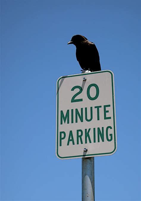 parking attendant photograph