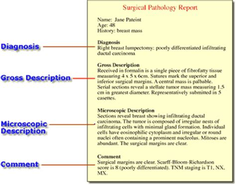 surgical pathology report sle pin pathology report template on